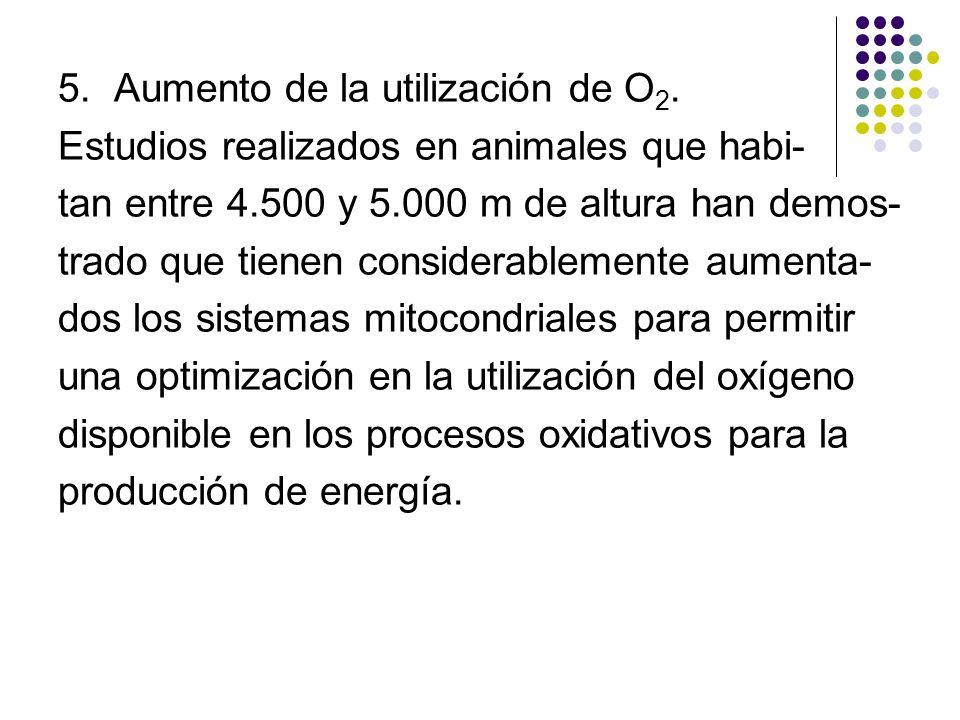 5. Aumento de la utilización de O 2. Estudios realizados en animales que habi- tan entre 4.500 y 5.000 m de altura han demos- trado que tienen conside