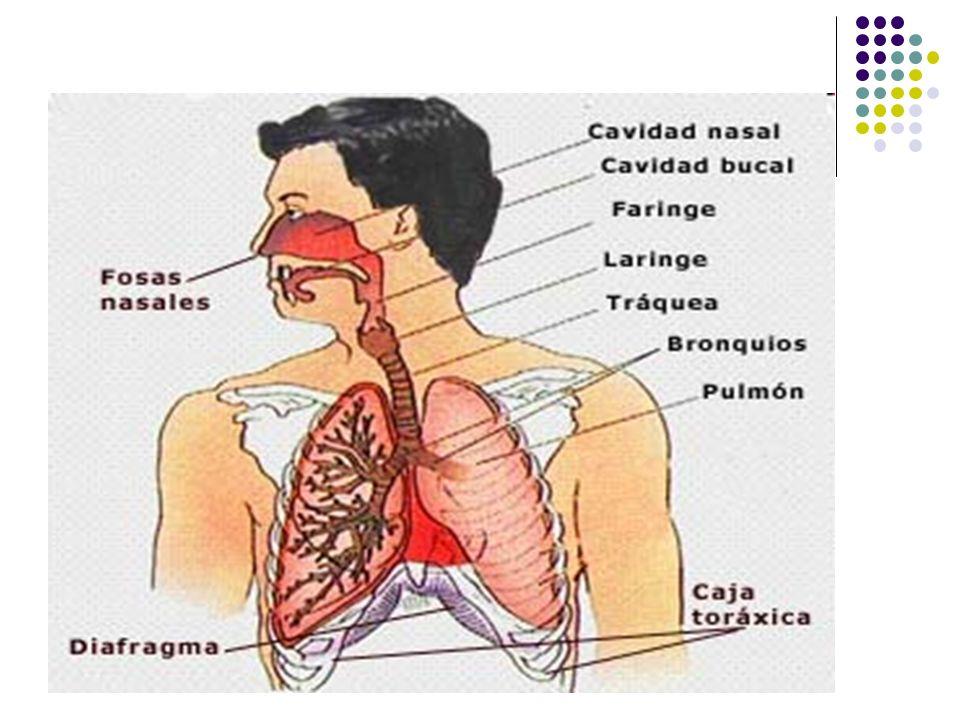Movimientos respiratorios