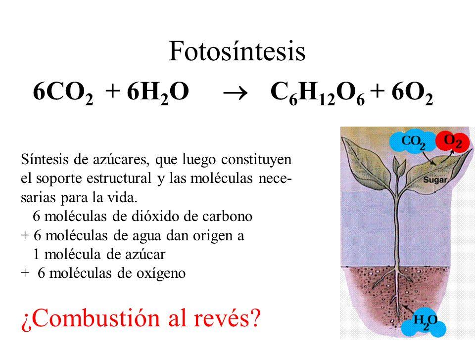 Combustibles Fósiles Así visto, la humanidad encontró un gran acopio de biomasa procesada hasta la forma de combustibles (600 millones de años de ahorro de energía solar como biomasa) La combustión es la reacción inversa de la foto síntesis, por ende recupera la energía de la molécula en la forma de calor.