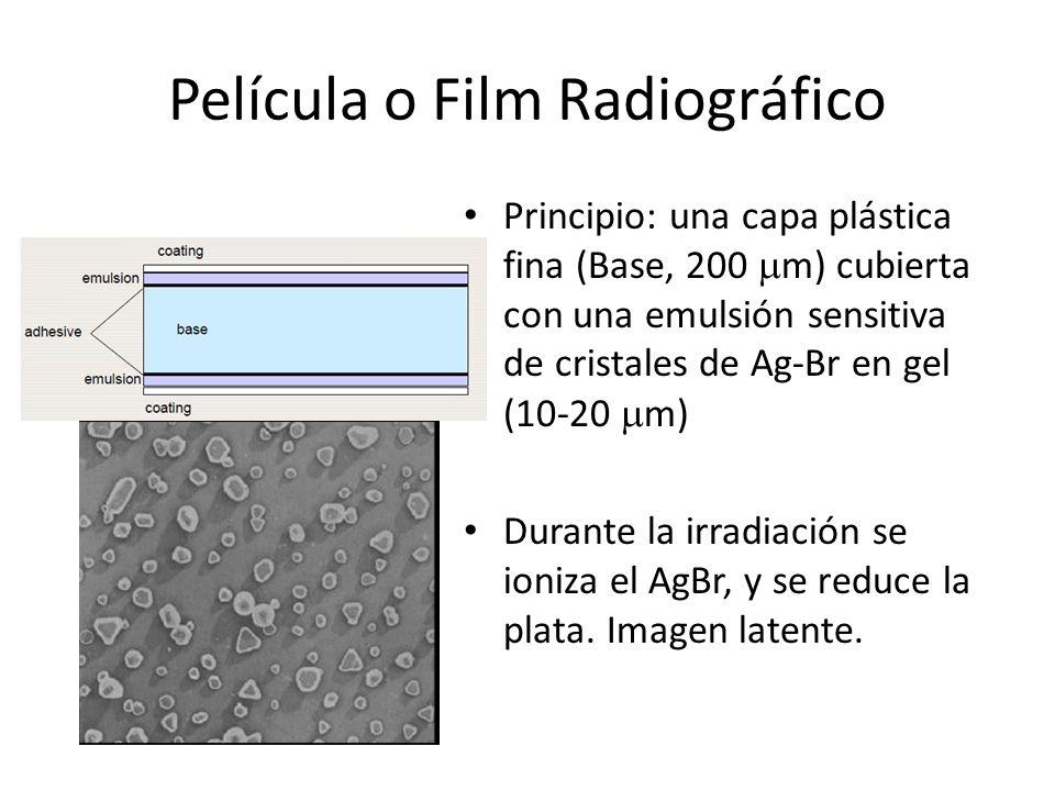 Película o Film Radiográfico Principio: una capa plástica fina (Base, 200 m) cubierta con una emulsión sensitiva de cristales de Ag-Br en gel (10-20 m
