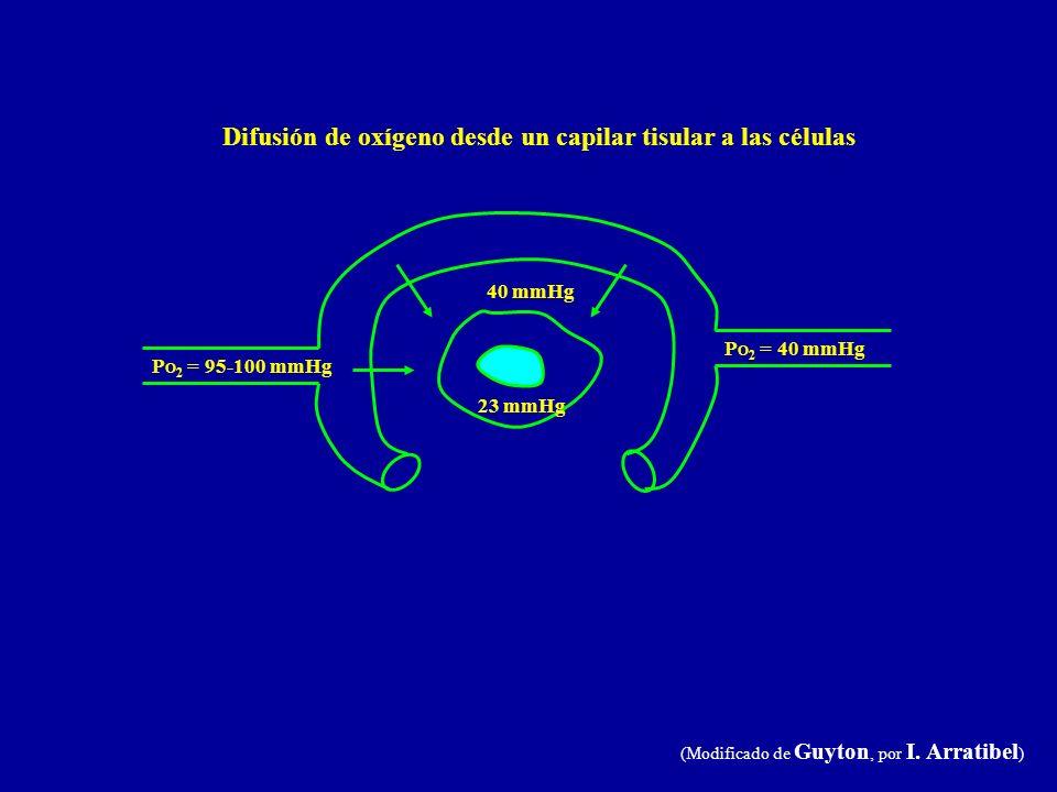 P O 2 = 95-100 mmHg 40 mmHg P O 2 = 40 mmHg 23 mmHg Difusión de oxígeno desde un capilar tisular a las células (Modificado de Guyton, por I. Arratibel