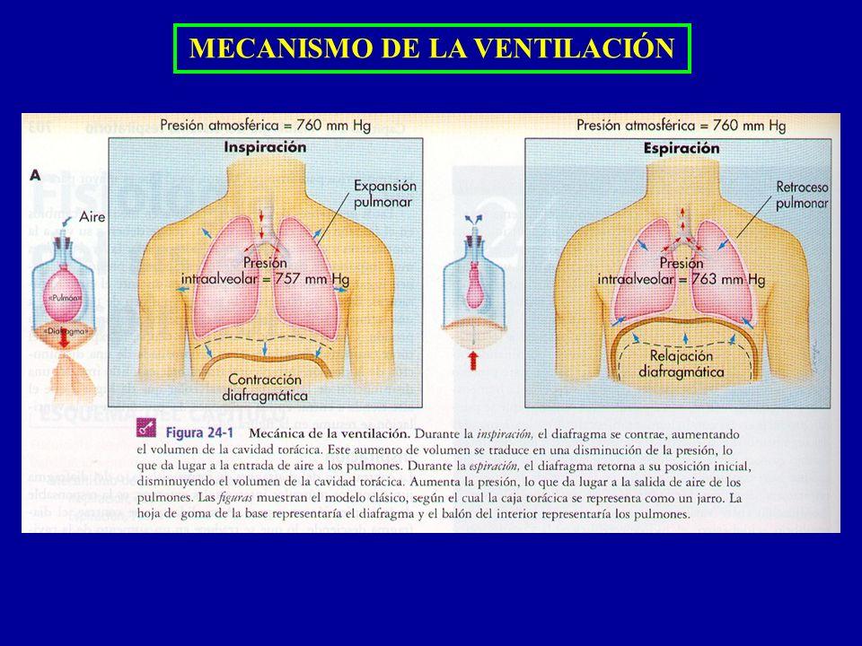 MECANISMO DE LA VENTILACIÓN