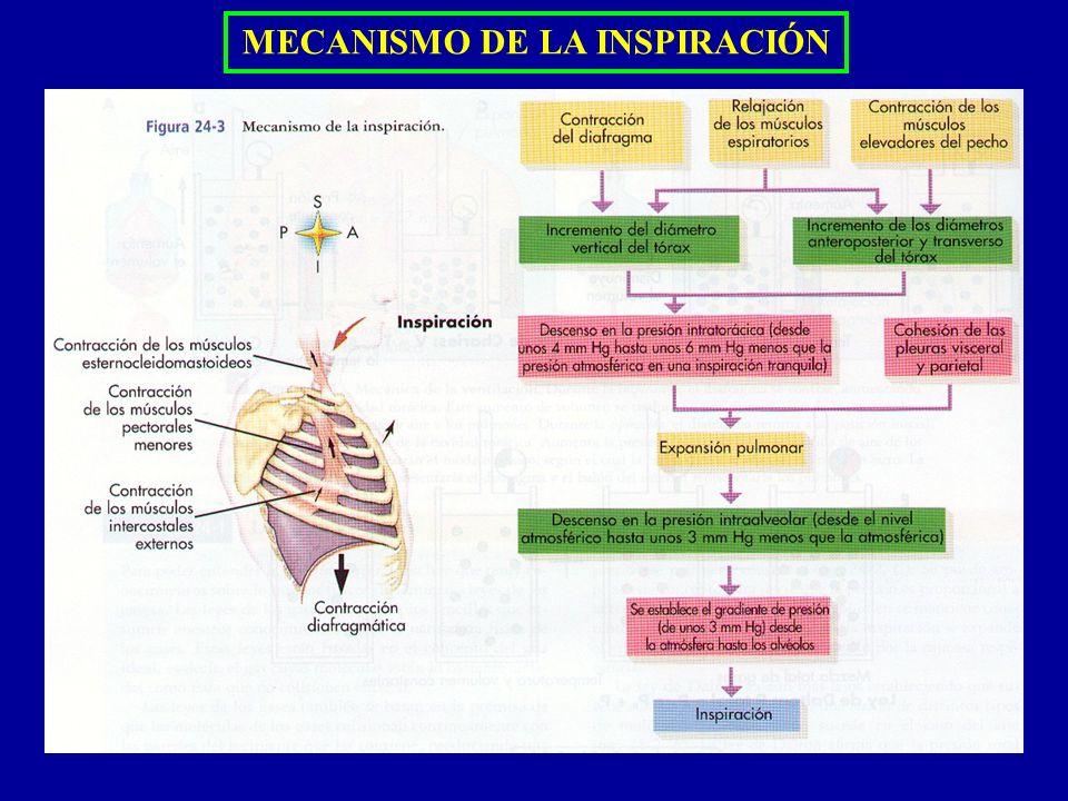 MECANISMO DE LA INSPIRACIÓN