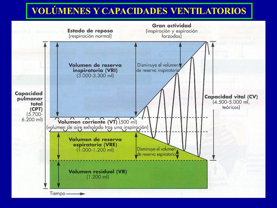 PRINCIPIOS FÍSICOS DEL INTERCAMBIO GASEOSO DIFUSIÓNDIFUSIÓN NETA Presión Producida por el impacto constante de las moléculas contra una superficie La presión total de un gas es directamente proporcional a la concentración de las moléculas del gas El aire es una mezcla de gases: O 2, N 2, CO 2, H 2 O, He Presión parcial de un gas:es la presión causada por cada gas