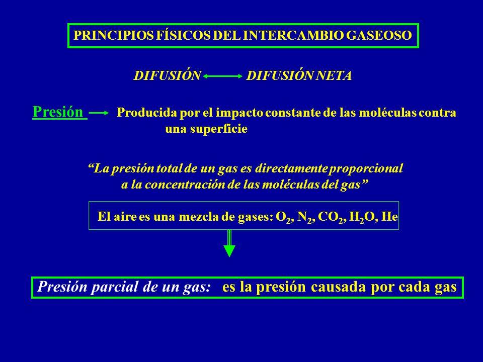 PRINCIPIOS FÍSICOS DEL INTERCAMBIO GASEOSO Aire atmosférico (mmHg) Aire humidificado (mmHg) Aire alveolar (mmHg) Aire espirado (mmHg) N2N2 O 2 CO 2 H 2 O 597.0 159.0 0.3 3.7 563.4 149.3 0.3 47.0 569.0 104.0 40.0 47.0 566.0 120.0 27.0 47.0 (78.62%) (20.84%) (0.04%) (0.50%) (74.09%) (19.67%) (0.04%) (6.20%) (74.9%) (13.6%) (5.3%) (6.2%) (74.5%) (15.7%) (36%) (6.2%) 760.0 (100.0%) (Tomado del Guyton) PRESIONES PARCIALES DE LOS GASES RESPIRATORIOS A NIVEL DEL MAR