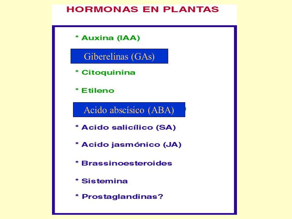 Giberelinas (GAs) Acido abscísico (ABA)