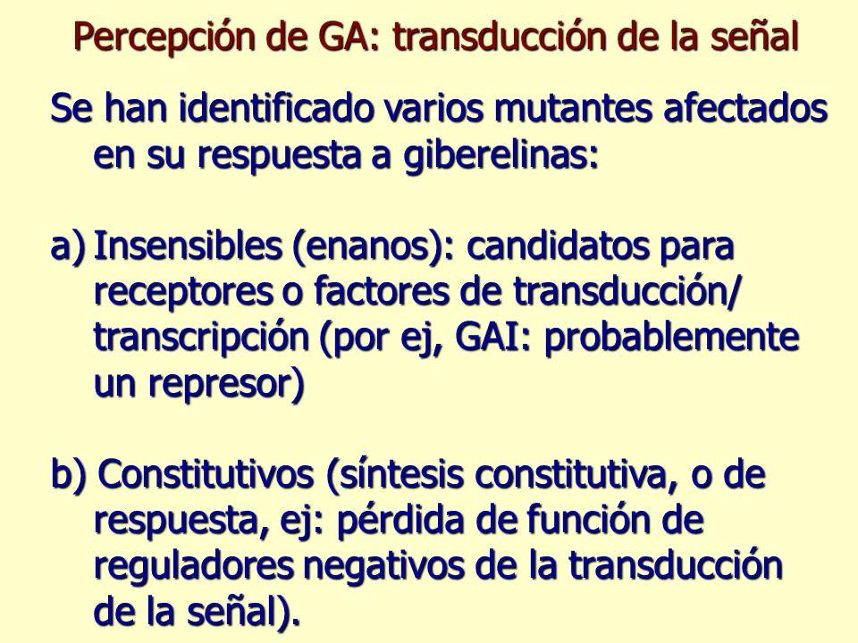 Percepción de GA: transducción de la señal Se han identificado varios mutantes afectados en su respuesta a giberelinas: a)Insensibles (enanos): candid