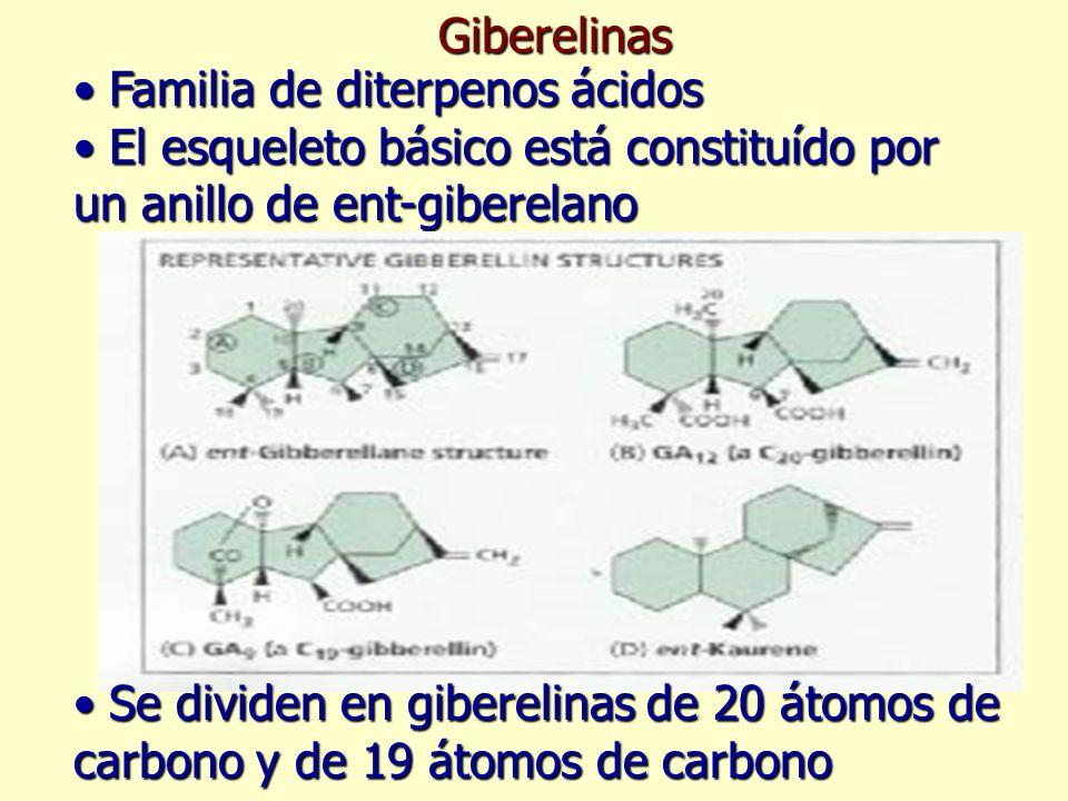 Existen más de 100 giberelinas en plantas superiores, pero unas pocas tienen actividad biológica.