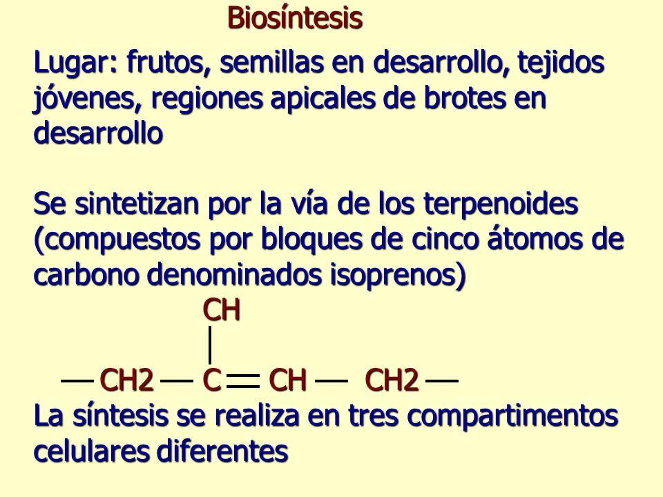 Biosíntesis Lugar: frutos, semillas en desarrollo, tejidos jóvenes, regiones apicales de brotes en desarrollo Se sintetizan por la vía de los terpenoi