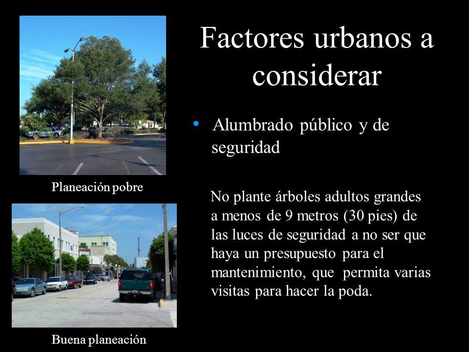 Alumbrado público y de seguridad No plante árboles adultos grandes a menos de 9 metros (30 pies) de las luces de seguridad a no ser que haya un presup