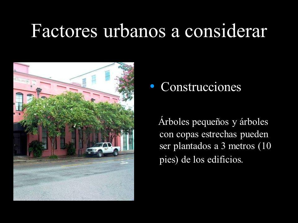 Construcciones Árboles pequeños y árboles con copas estrechas pueden ser plantados a 3 metros (10 pies) de los edificios. Factores urbanos a considera