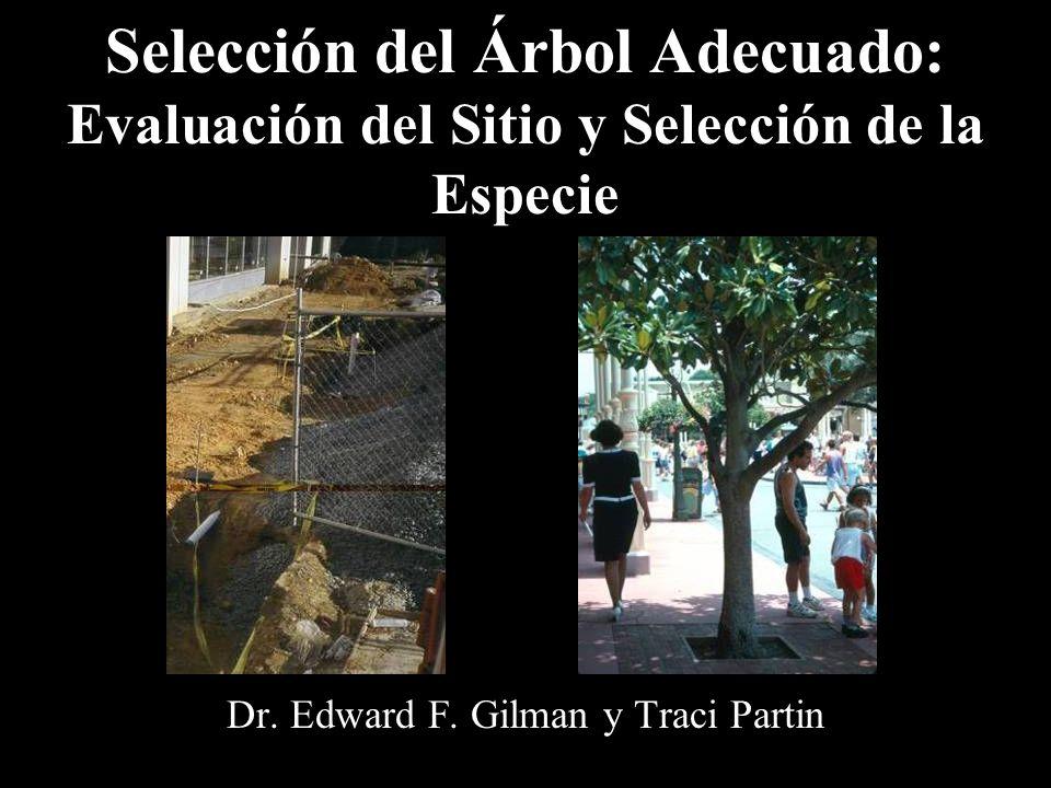 Selección del Árbol Adecuado: Evaluación del Sitio y Selección de la Especie Dr. Edward F. Gilman y Traci Partin
