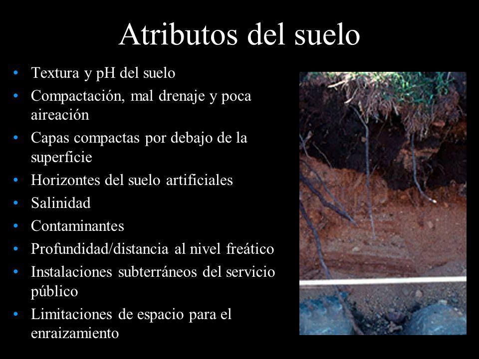 Atributos del suelo Textura y pH del suelo Compactación, mal drenaje y poca aireación Capas compactas por debajo de la superficie Horizontes del suelo