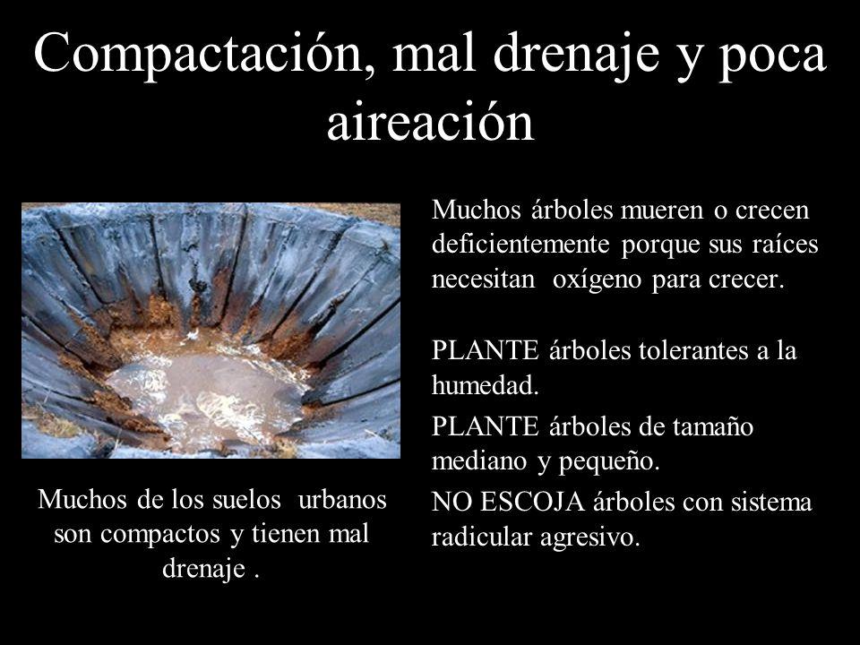 Compactación, mal drenaje y poca aireación Muchos árboles mueren o crecen deficientemente porque sus raíces necesitan oxígeno para crecer. PLANTE árbo