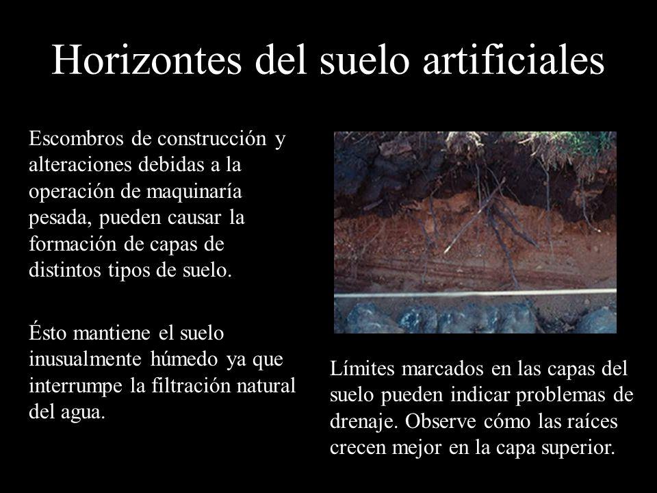 Horizontes del suelo artificiales Escombros de construcción y alteraciones debidas a la operación de maquinaría pesada, pueden causar la formación de