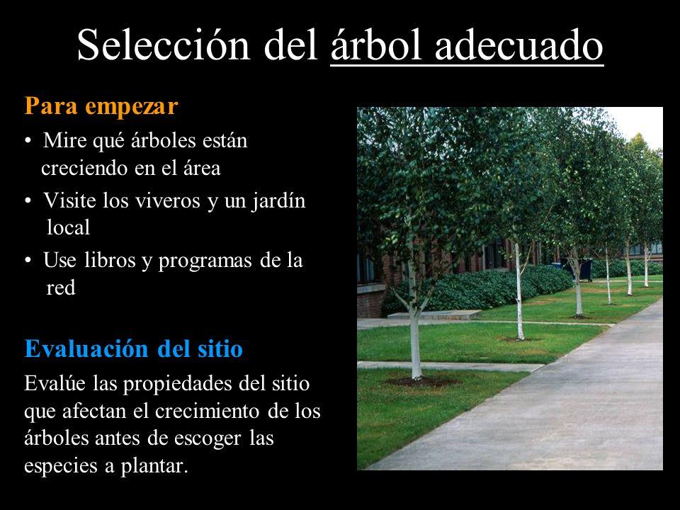 Selección del árbol adecuado Para empezar Mire qué árboles están creciendo en el área Visite los viveros y un jardín local Use libros y programas de l