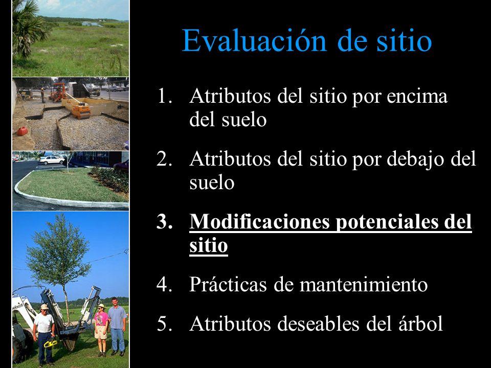 Evaluación de sitio 1.Atributos del sitio por encima del suelo 2.Atributos del sitio por debajo del suelo 3.Modificaciones potenciales del sitio 4.Prá