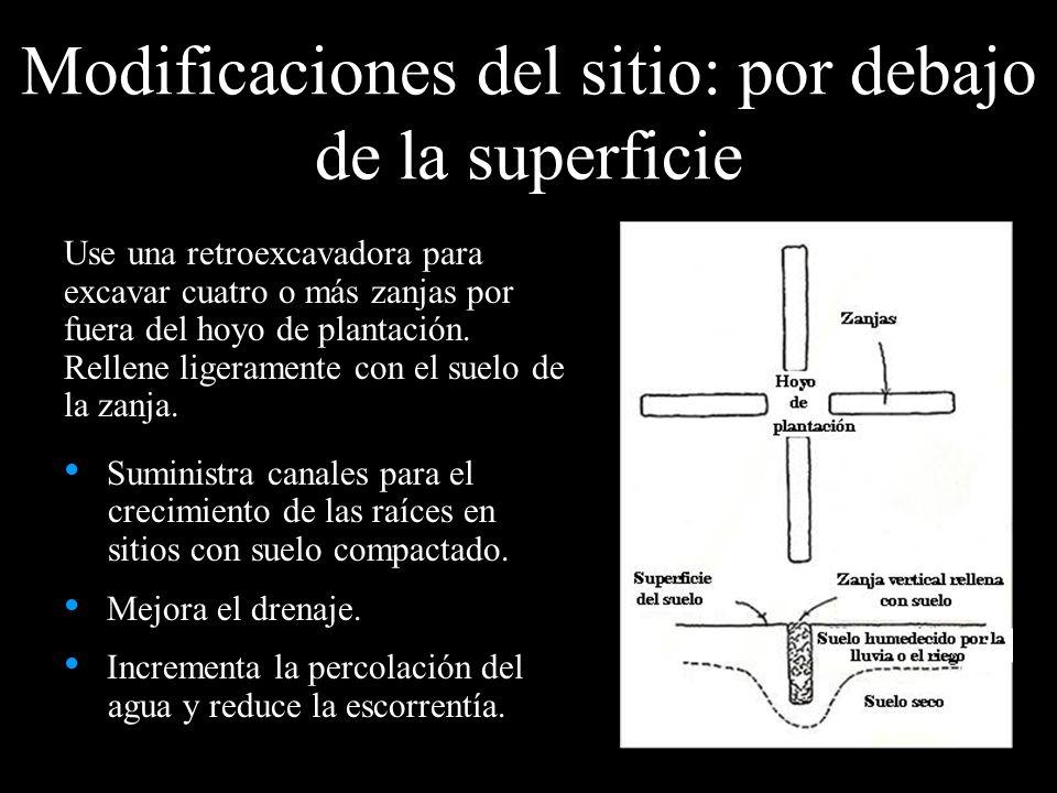 Modificaciones del sitio: por debajo de la superficie Use una retroexcavadora para excavar cuatro o más zanjas por fuera del hoyo de plantación. Relle
