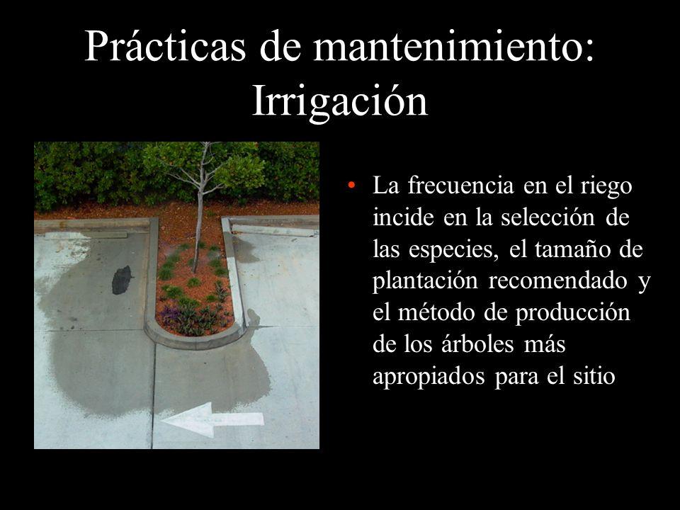 Prácticas de mantenimiento: Irrigación La frecuencia en el riego incide en la selección de las especies, el tamaño de plantación recomendado y el méto