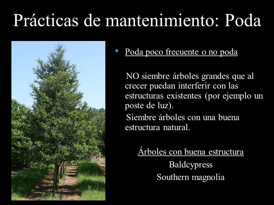 Prácticas de mantenimiento: Poda Poda poco frecuente o no poda NO siembre árboles grandes que al crecer puedan interferir con las estructuras existent