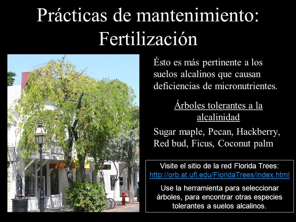 Prácticas de mantenimiento: Fertilización Ésto es más pertinente a los suelos alcalinos que causan deficiencias de micronutrientes. Árboles tolerantes