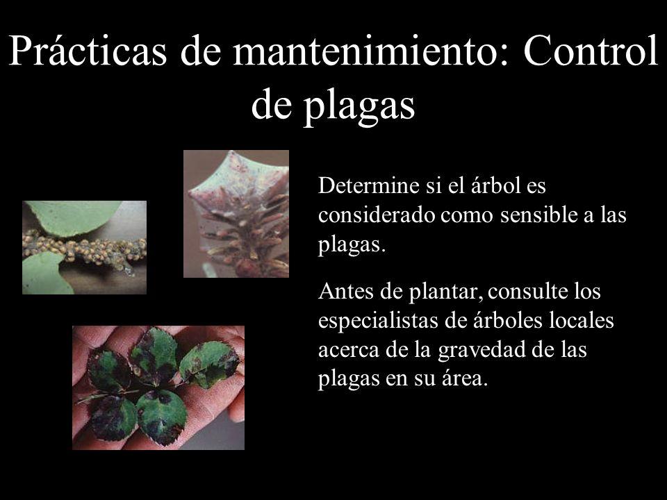Prácticas de mantenimiento: Control de plagas Determine si el árbol es considerado como sensible a las plagas. Antes de plantar, consulte los especial