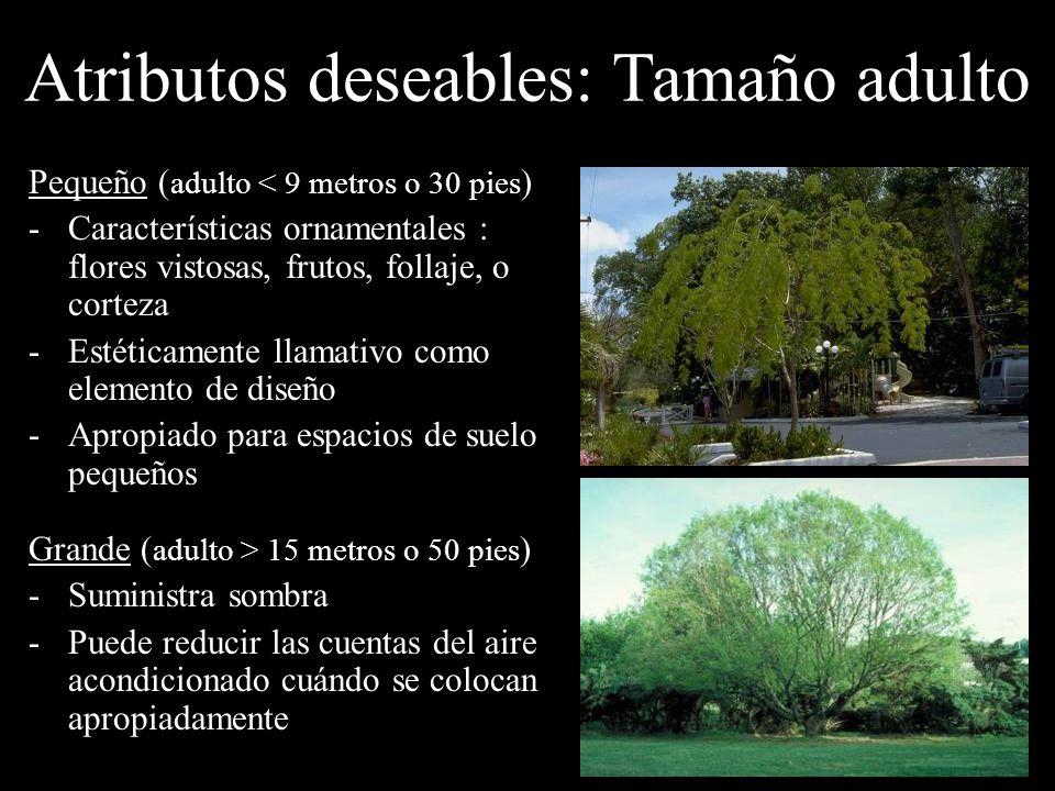 Pequeño ( adulto < 9 metros o 30 pies ) -Características ornamentales : flores vistosas, frutos, follaje, o corteza -Estéticamente llamativo como elem