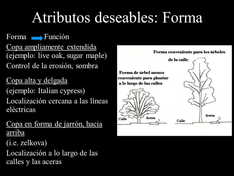 Forma Función Copa ampliamente extendida (ejemplo: live oak, sugar maple) Control de la erosión, sombra Copa alta y delgada (ejemplo: Italian cypress)