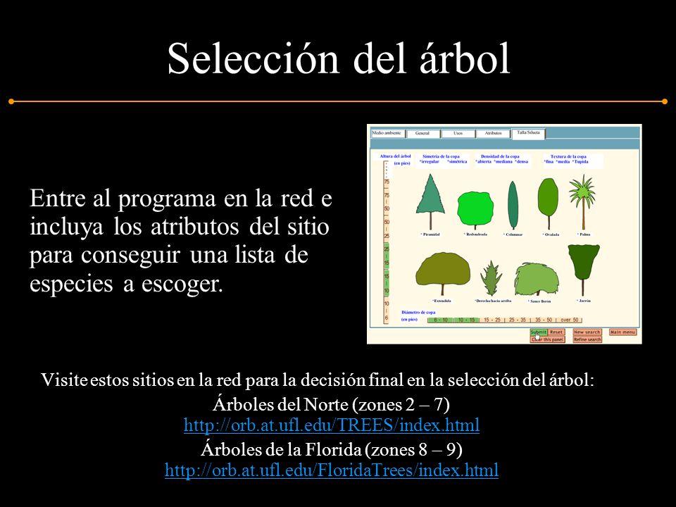 Selección del árbol Visite estos sitios en la red para la decisión final en la selección del árbol: Árboles del Norte (zones 2 – 7) http://orb.at.ufl.