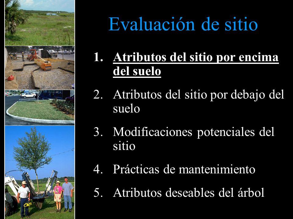 Evaluación de sitio 1.Atributos del sitio por encima del suelo 2.Atributos del sitio por debajo del suelo 3.Modificaciones potenciales del sitio 4.Prácticas de mantenimiento 5.Atributos deseables del árbol