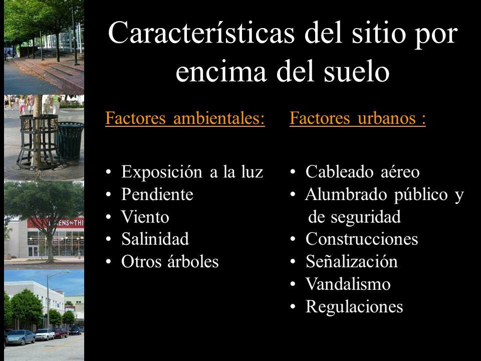 Características del sitio por encima del suelo Factores ambientales: Exposición a la luz Pendiente Viento Salinidad Otros árboles Factores urbanos : C