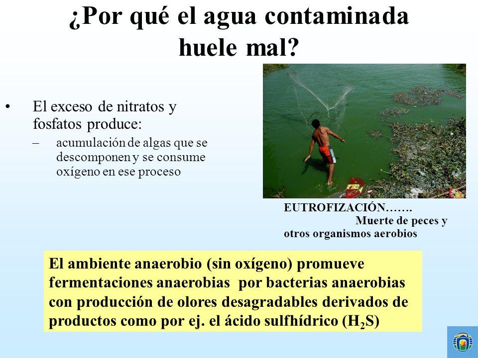 ¿Por qué el agua contaminada huele mal? El exceso de nitratos y fosfatos produce: –acumulación de algas que se descomponen y se consume oxígeno en ese