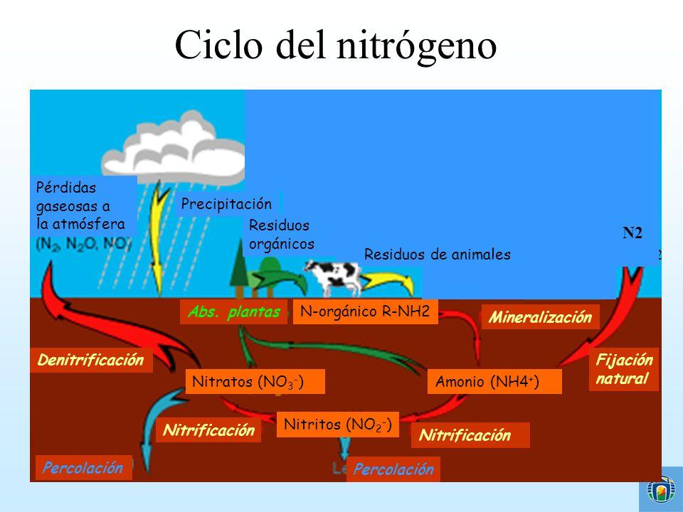 Ciclo del nitrógeno Pérdidas gaseosas a la atmósfera Residuos orgánicos Combustión de combustibles fósiles Precipitación Nitratos (NO 3 - ) Nitritos (