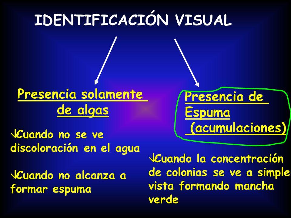 IDENTIFICACIÓN VISUAL Presencia solamente de algas Presencia de Espuma (acumulaciones) âCuando no se ve discoloración en el agua âCuando no alcanza a