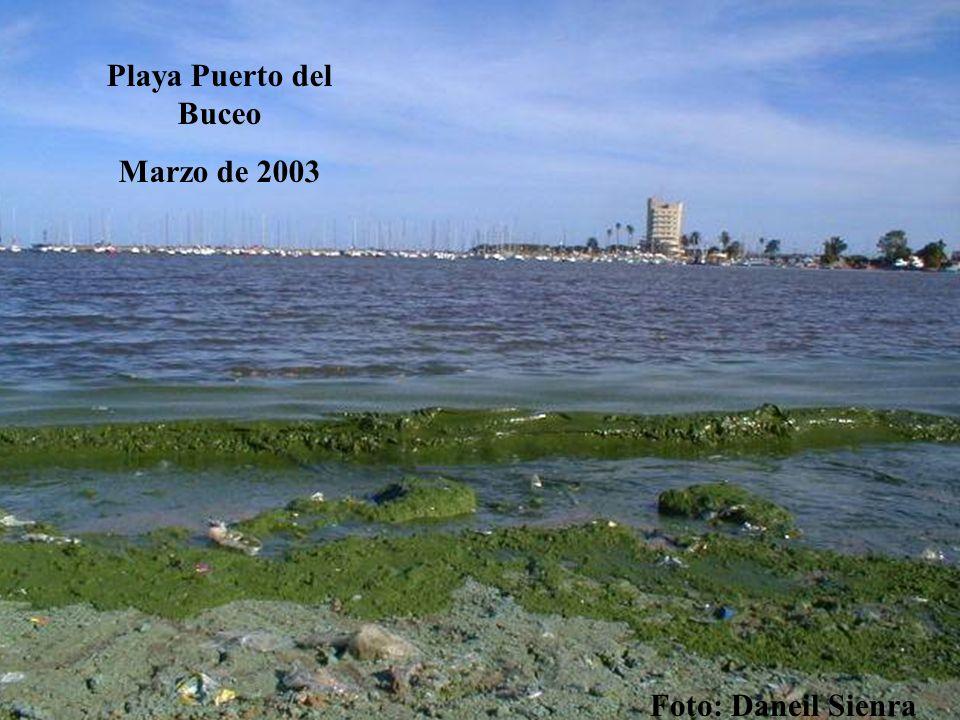 Playa Puerto del Buceo Marzo de 2003 Foto: Daneil Sienra