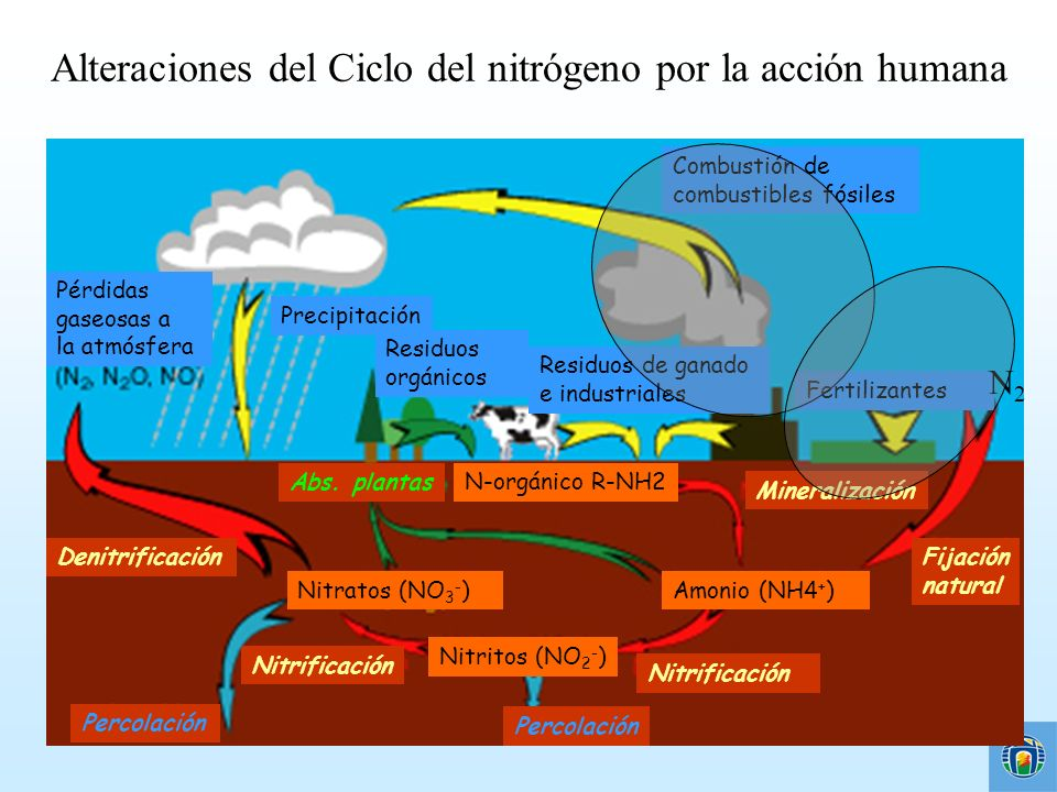 Alteraciones del Ciclo del nitrógeno por la acción humana Pérdidas gaseosas a la atmósfera Residuos orgánicos Combustión de combustibles fósiles Preci