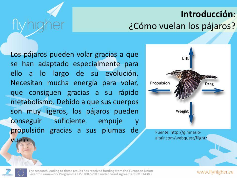 www.flyhigher.eu Los pájaros pueden volar gracias a que se han adaptado especialmente para ello a lo largo de su evolución. Necesitan mucha energía pa