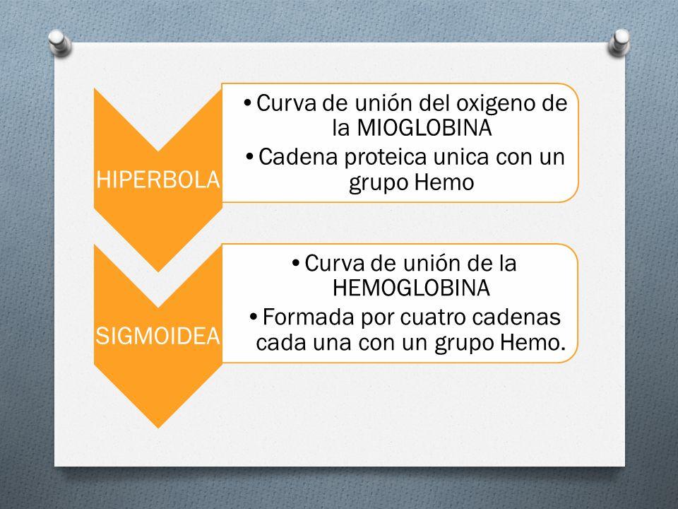O HIPERBOLA Curva de unión del oxigeno de la MIOGLOBINA Cadena proteica unica con un grupo Hemo SIGMOIDEA Curva de unión de la HEMOGLOBINA Formada por cuatro cadenas cada una con un grupo Hemo.