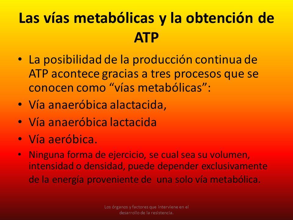 La posibilidad de la producción continua de ATP acontece gracias a tres procesos que se conocen como vías metabólicas: Vía anaeróbica alactacida, Vía