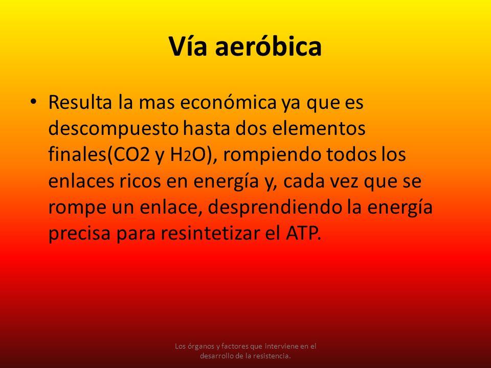 Vía aeróbica Resulta la mas económica ya que es descompuesto hasta dos elementos finales(CO2 y H 2 O), rompiendo todos los enlaces ricos en energía y,