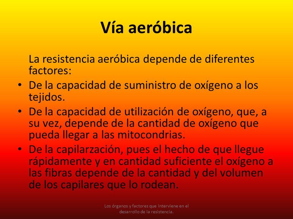 La resistencia aeróbica depende de diferentes factores: De la capacidad de suministro de oxígeno a los tejidos. De la capacidad de utilización de oxíg