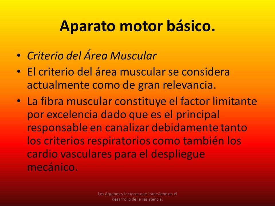 Aparato motor básico. Criterio del Área Muscular El criterio del área muscular se considera actualmente como de gran relevancia. La fibra muscular con