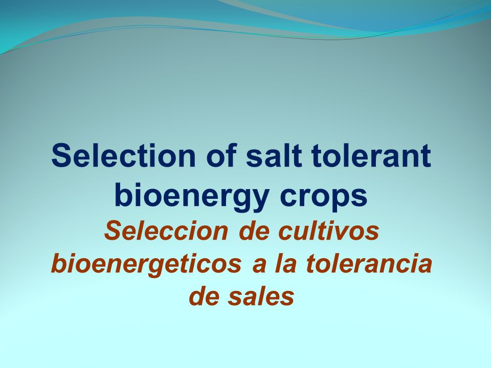 Selection of salt tolerant bioenergy crops Seleccion de cultivos bioenergeticos a la tolerancia de sales