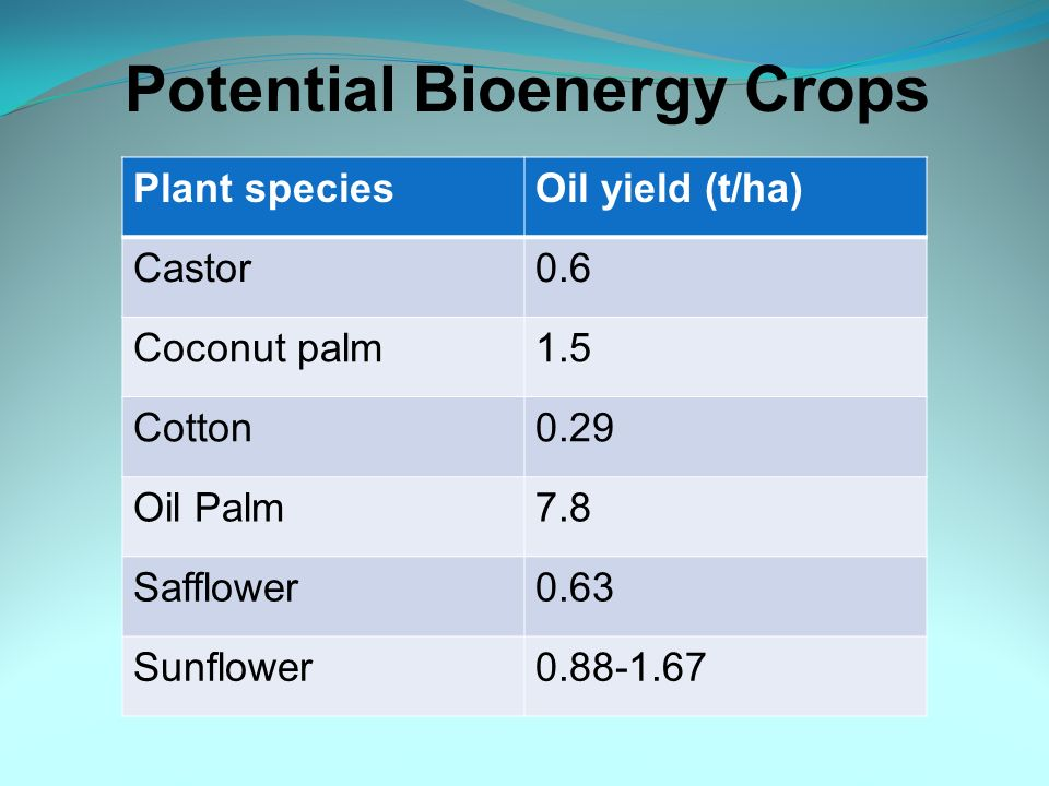 Potential Bioenergy Crops Plant speciesOil yield (t/ha) Castor0.6 Coconut palm1.5 Cotton0.29 Oil Palm7.8 Safflower0.63 Sunflower0.88-1.67