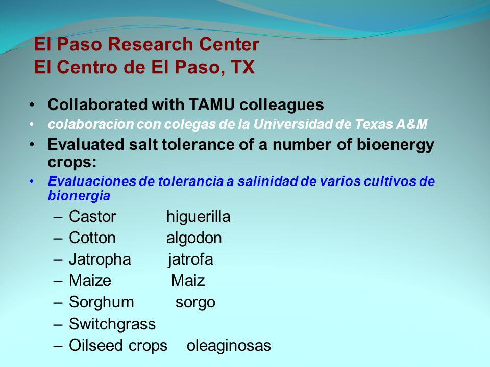 El Paso Research Center El Centro de El Paso, TX Collaborated with TAMU colleagues colaboracion con colegas de la Universidad de Texas A&M Evaluated salt tolerance of a number of bioenergy crops: Evaluaciones de tolerancia a salinidad de varios cultivos de bionergia –Castor higuerilla –Cotton algodon –Jatropha jatrofa –Maize Maiz –Sorghum sorgo –Switchgrass –Oilseed crops oleaginosas