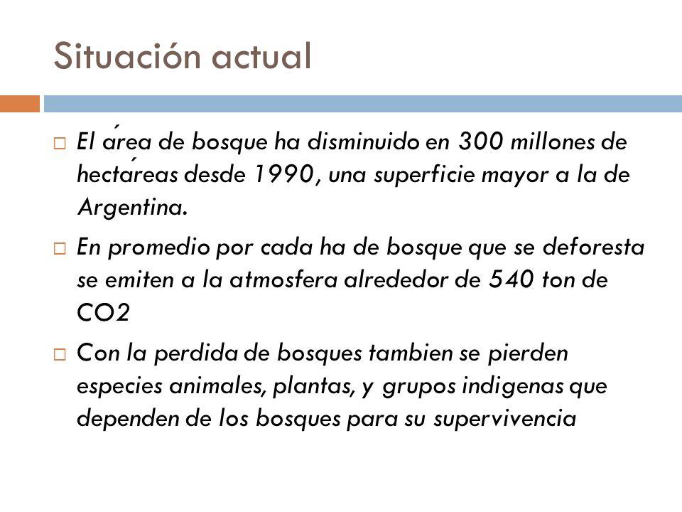 Situación actual El area de bosque ha disminuido en 300 millones de hectareas desde 1990, una superficie mayor a la de Argentina. En promedio por cada