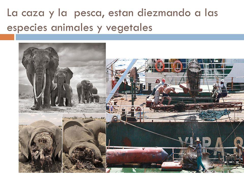 La caza y la pesca, estan diezmando a las especies animales y vegetales