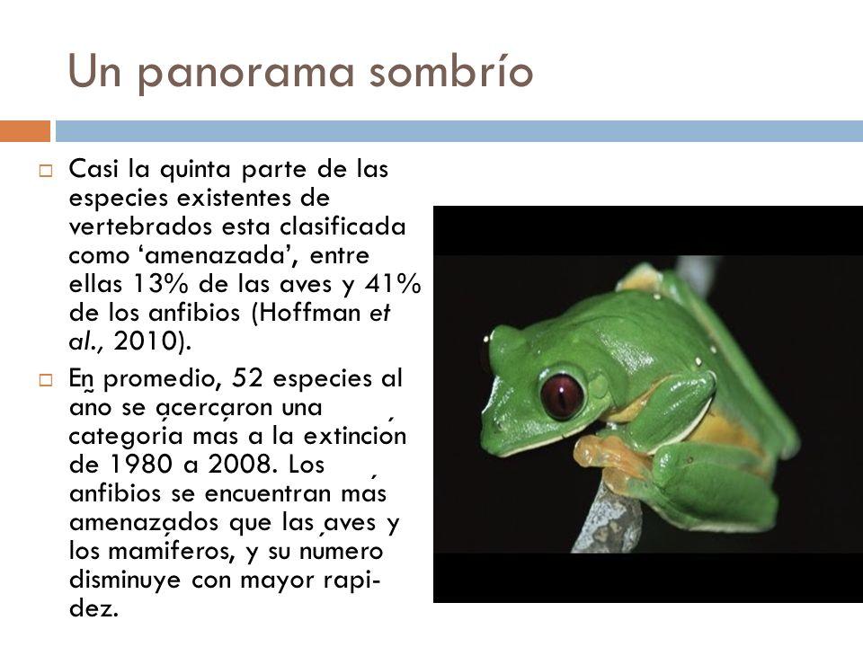 Un panorama sombrío Casi la quinta parte de las especies existentes de vertebrados esta clasificada como amenazada, entre ellas 13% de las aves y 41% de los anfibios (Hoffman et al., 2010).
