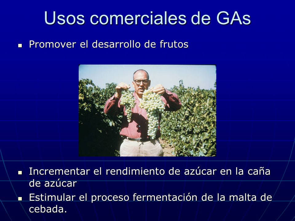 Usos comerciales de GAs Promover el desarrollo de frutos Promover el desarrollo de frutos Incrementar el rendimiento de azúcar en la caña de azúcar In