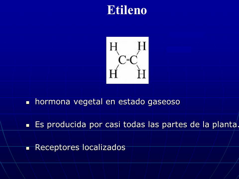 Etileno hormona vegetal en estado gaseoso hormona vegetal en estado gaseoso Es producida por casi todas las partes de la planta. Es producida por casi
